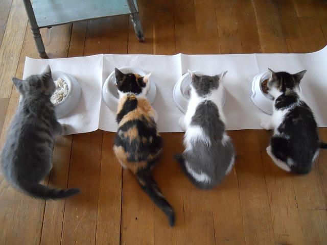 čtyři kočky.jpg